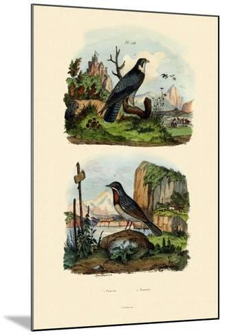 Falcon, 1833-39--Mounted Giclee Print