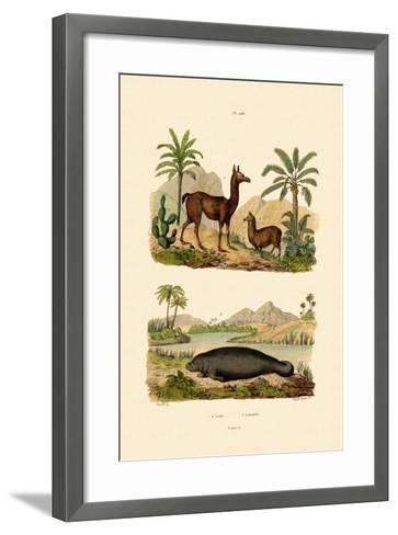 Llama, 1833-39--Framed Art Print