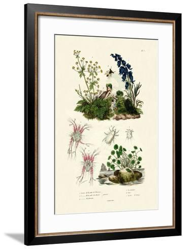 Mites, 1833-39--Framed Art Print