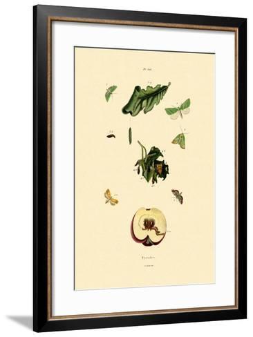 Snout Moths, 1833-39--Framed Art Print
