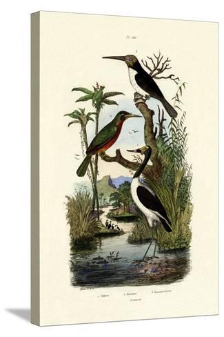 Jabiru, 1833-39--Stretched Canvas Print