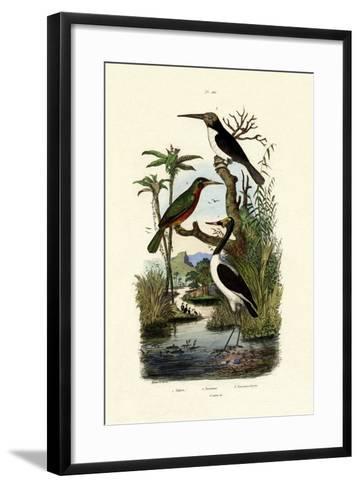 Jabiru, 1833-39--Framed Art Print