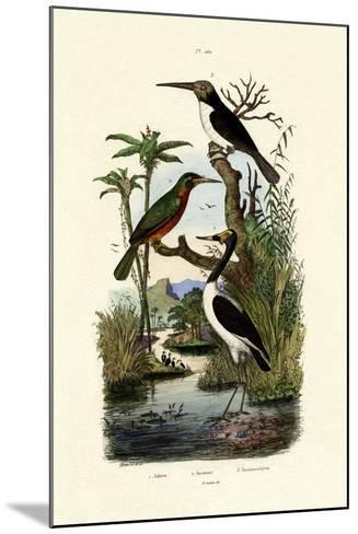 Jabiru, 1833-39--Mounted Giclee Print