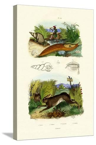 Yellow Slug, 1833-39--Stretched Canvas Print