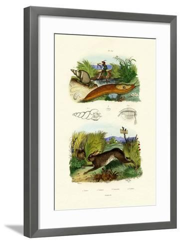 Yellow Slug, 1833-39--Framed Art Print