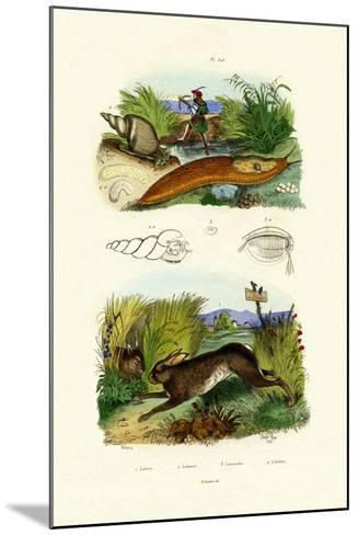 Yellow Slug, 1833-39--Mounted Giclee Print