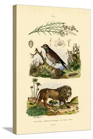 Linnet, 1833-39--Stretched Canvas Print