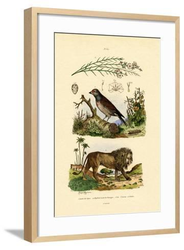 Linnet, 1833-39--Framed Art Print
