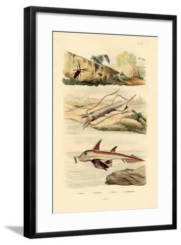 Squid, 1833-39--Framed Art Print
