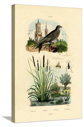 Swift, 1833-39--Stretched Canvas Print