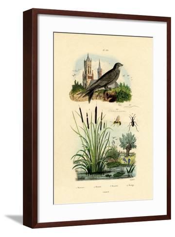 Swift, 1833-39--Framed Art Print