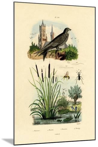 Swift, 1833-39--Mounted Giclee Print