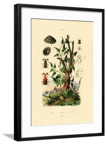 Potato, 1833-39--Framed Art Print