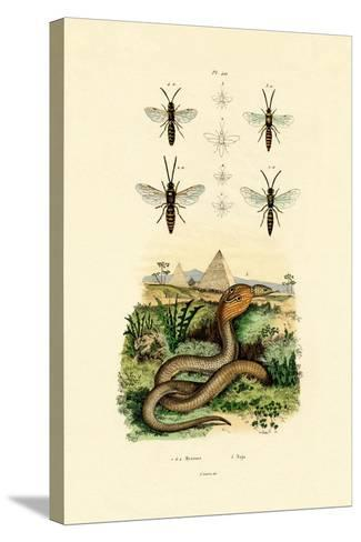 Wasps, 1833-39--Stretched Canvas Print