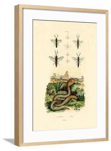 Wasps, 1833-39--Framed Art Print