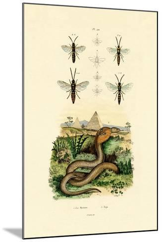 Wasps, 1833-39--Mounted Giclee Print
