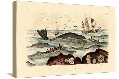 Whale, 1833-39--Stretched Canvas Print
