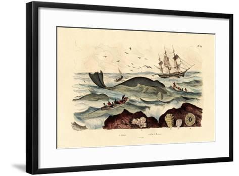 Whale, 1833-39--Framed Art Print