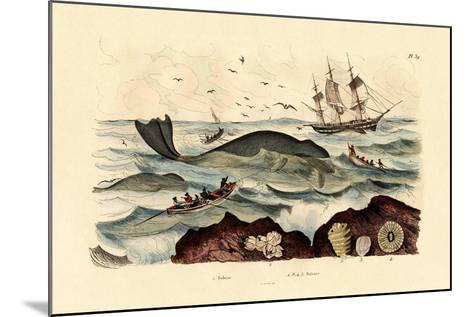 Whale, 1833-39--Mounted Giclee Print