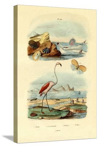 Shells, 1833-39--Stretched Canvas Print