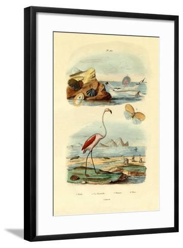 Shells, 1833-39--Framed Art Print
