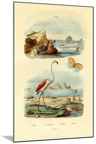 Shells, 1833-39--Mounted Giclee Print