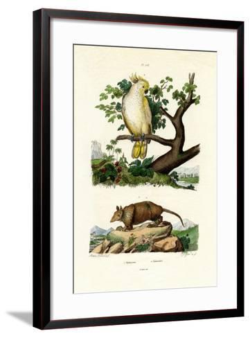 Armadillo, 1833-39--Framed Art Print