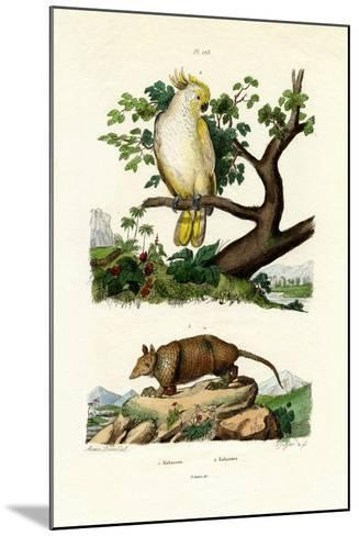 Armadillo, 1833-39--Mounted Giclee Print