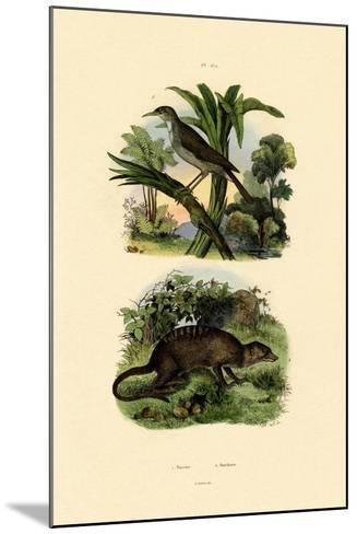 Conebill, 1833-39--Mounted Giclee Print