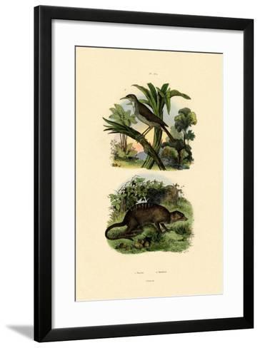 Conebill, 1833-39--Framed Art Print