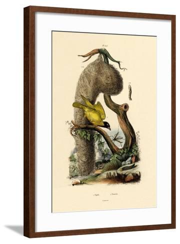 Cranefly, 1833-39--Framed Art Print