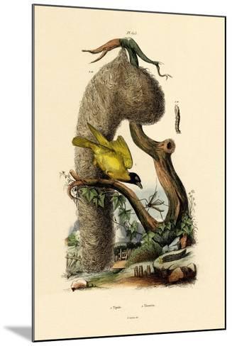 Cranefly, 1833-39--Mounted Giclee Print