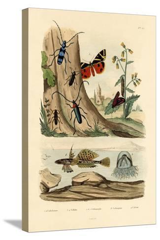 Dew Moth, 1833-39--Stretched Canvas Print