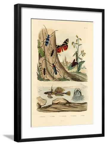 Dew Moth, 1833-39--Framed Art Print