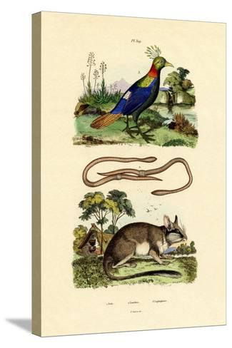Dormouse, 1833-39--Stretched Canvas Print