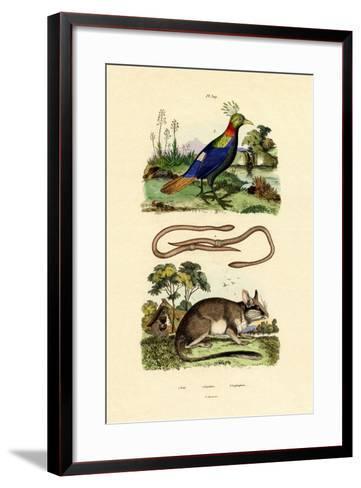 Dormouse, 1833-39--Framed Art Print