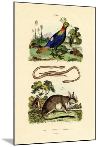 Dormouse, 1833-39--Mounted Giclee Print