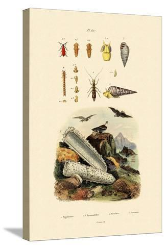 Insects, 1833-39--Stretched Canvas Print
