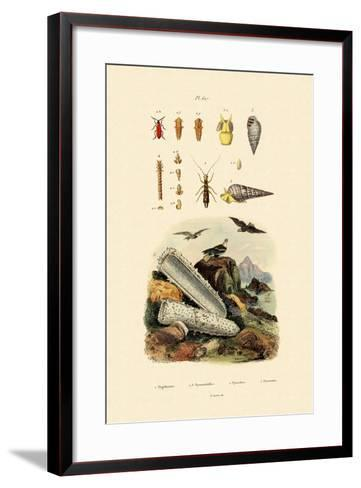 Insects, 1833-39--Framed Art Print