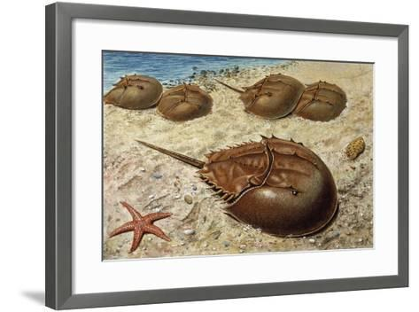 Atlantic Horseshoe Crab (Limulus Polyphemus), Limulidae--Framed Art Print