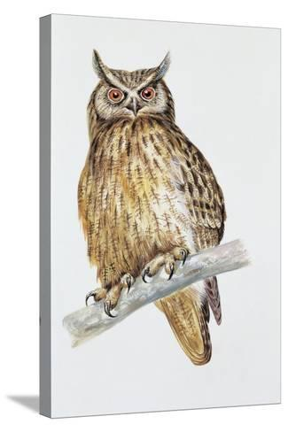 Close-Up of an Eurasian Eagle Owl Perching on the Branch (Bubo Bubo)--Stretched Canvas Print
