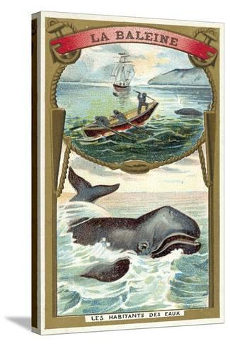 Whale--Stretched Canvas Print