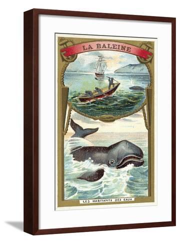 Whale--Framed Art Print