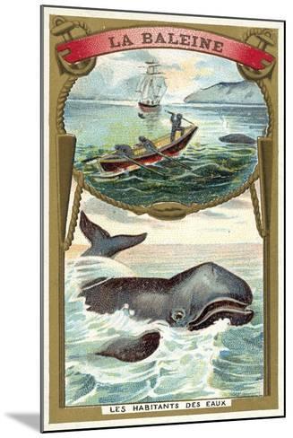 Whale--Mounted Giclee Print