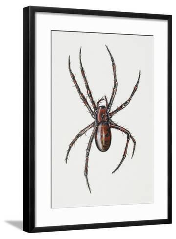 Cave Spider (Meta Menardi), Tetragnathidae, Artwork by Rebecca Hardy--Framed Art Print