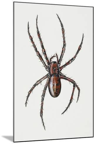 Cave Spider (Meta Menardi), Tetragnathidae, Artwork by Rebecca Hardy--Mounted Giclee Print