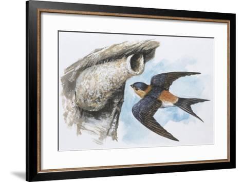 Zoology: Birds, Red-Rumped Swallow (Hirundo Daurica)--Framed Art Print