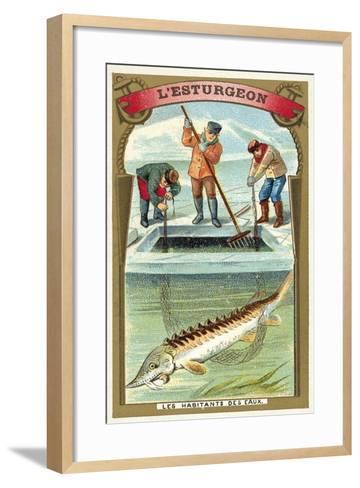 Sturgeon--Framed Art Print