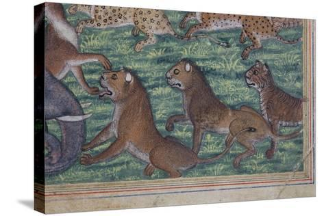 Detail from the Jackal Who Pronounced Himself King, C.1560-65--Stretched Canvas Print