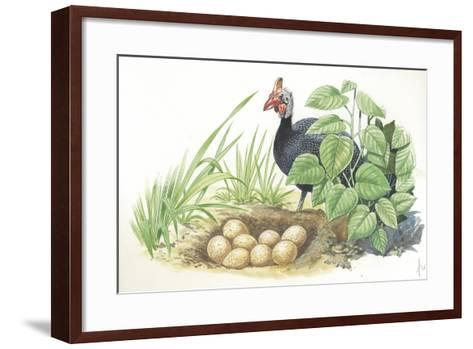 Helmeted Guineafowl Numida Meleagris at Nest with Eggs--Framed Art Print